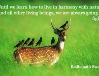 Radhanath Swami on harmony