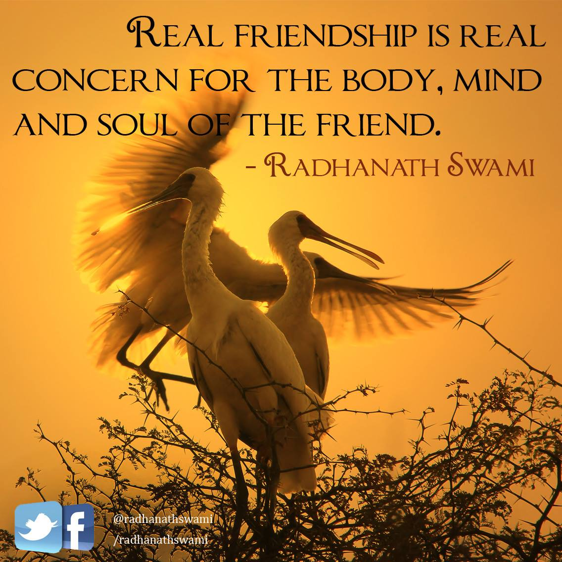 Quotes About Real Friendship Radhanath Swami Inspires  Radhanath Swami On Real Friendship